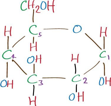 OCR AS Biology: Amylose, Amylopectin, Cellulose and ...
